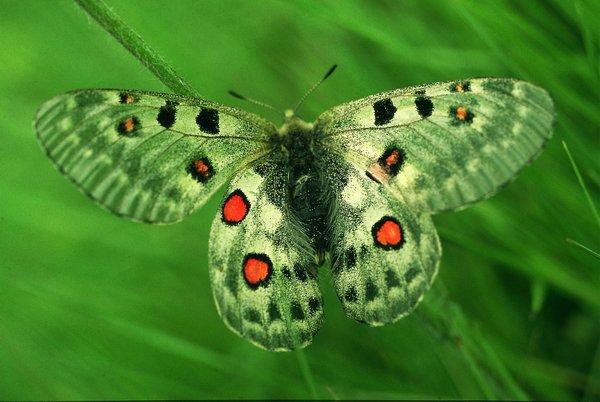 Бабочка фото дня