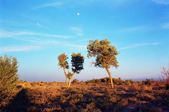 Пустыня фото дня