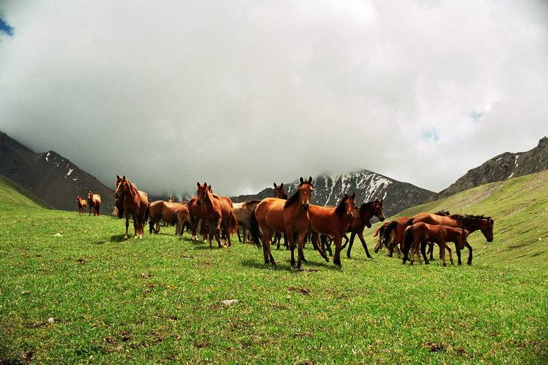 http://www.kazakh.ru/photo/horses/17_097.jpg