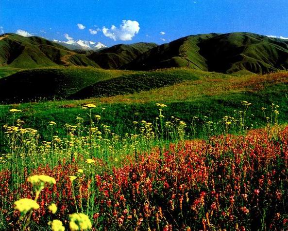 Казахские Просторы Категория.  Природа.